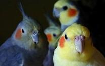 choisir_oiseau