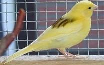 oiseauu