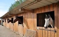 pension_cheval
