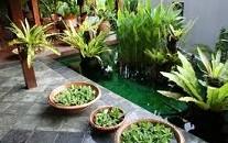 plantes_depolluantes
