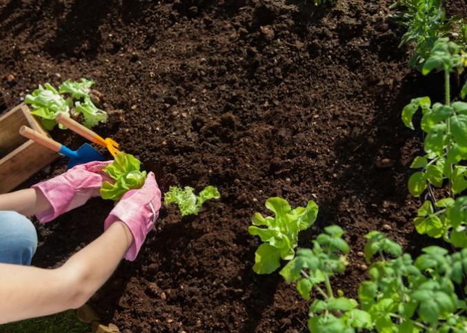 entretien du jardin pendant les vacances